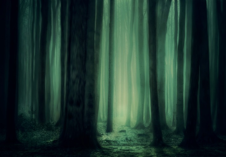 forest-3877365_1920