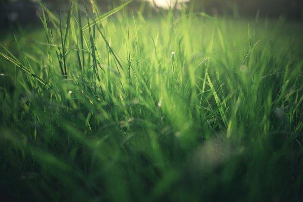 meadow-4623279_1920